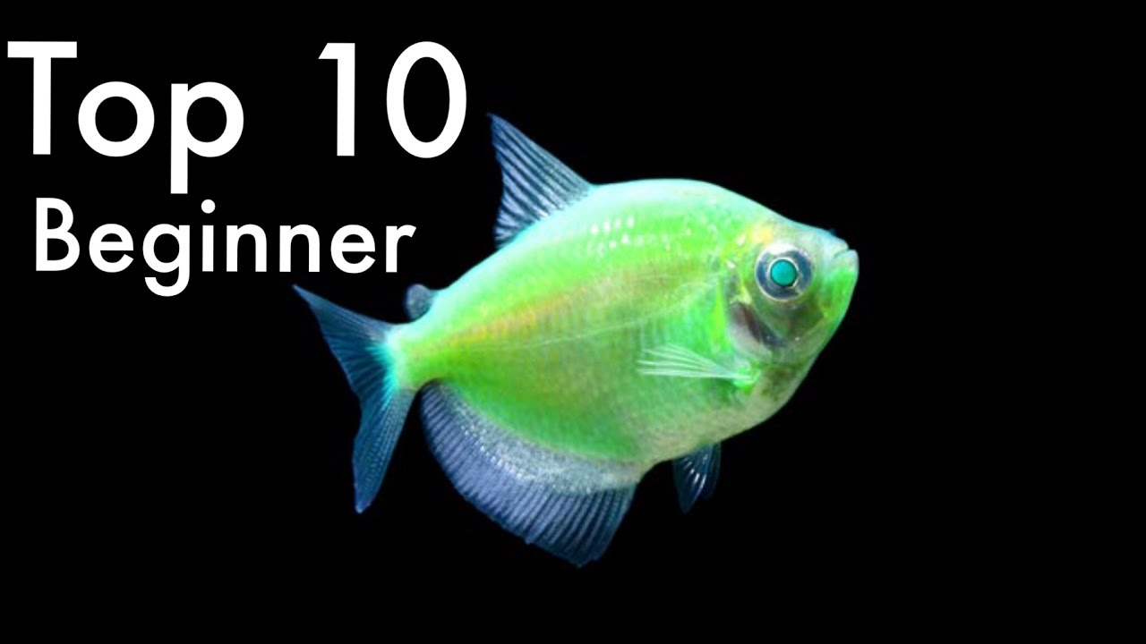 Top 10 beginner fish freshwater youtube for Jan s tropical fish
