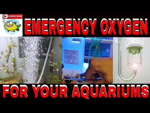 DIY EMERGENCY OXYGEN FOR YOUR AQUARIUM