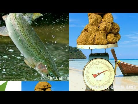 How To Locally Prepare High Protein Feed For Your Fish, Dog, Pig, Goat, Chicks E.t.c Using Soybeans