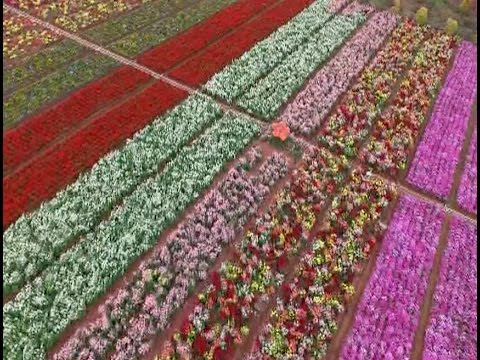 Flower Patches Attract Tourists in south China Province