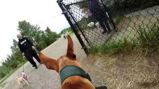 Phoebe's friend Levi tests out the GoPro Hero at Magnuson Park Dog ...