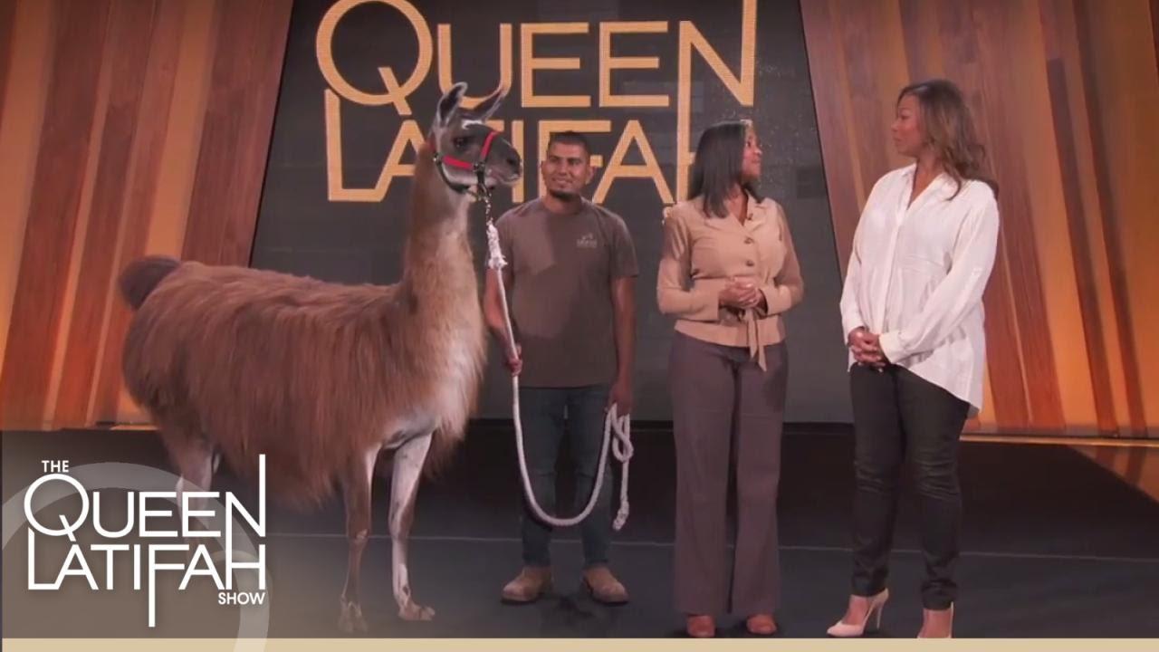 Queen Meets Lucky the Llama! | The Queen Latiafah Show
