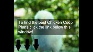A-Frame Chicken Coop Plans & Designs | How To Build An A-Frame Chicken Coop Plans | Cheap & Easy