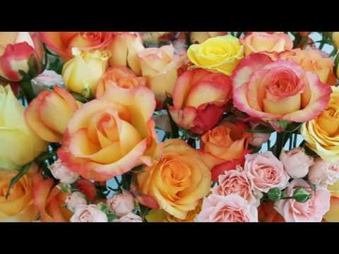 2017 Hong Kong Flower Show Full Video   B Movie
