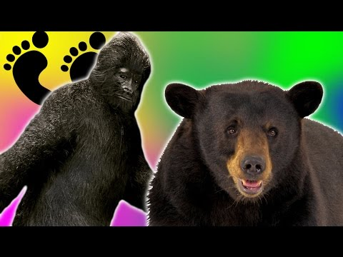 BIGFOOT CHALLENGES US! | Bear Simulator #9