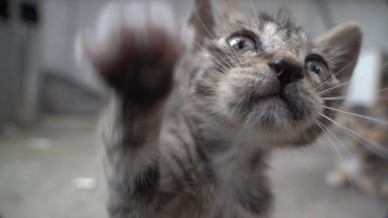 하루종일 심장폭행 하는 아기고양이들이 있다고요? 이 영상은 심장에 해롭습니다 (2/2)