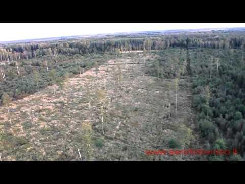 Zagare forests deer, Žagarės miškai, elnynas