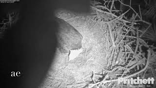 12-16-2018 Lizard makes his appearance to the cam..