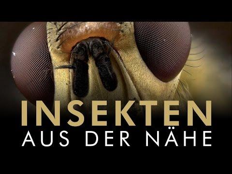 Insekten aus der Nähe 2011 Dokumentation | Film deutsch