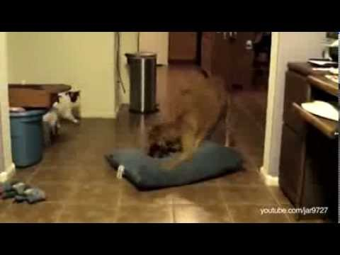 Dog beds stolen by cats compilation