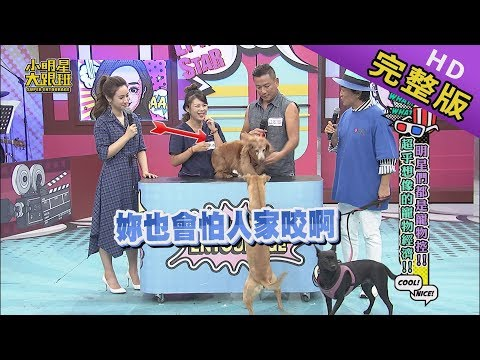 【完整版】明星寵物控  超乎想像的寵物經濟 2019.09.12小明星大跟班