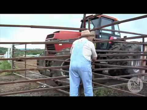 The Cost of Corn-Fed Cattle