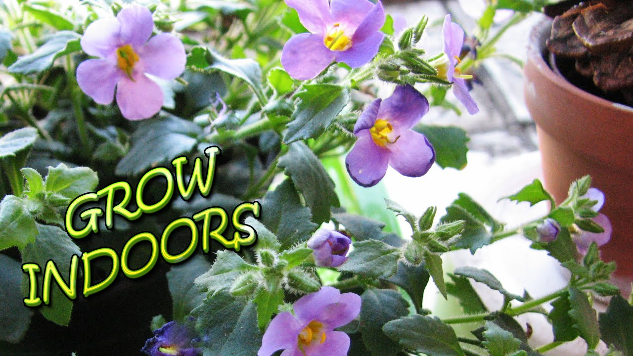 Grow Flowers Indoors