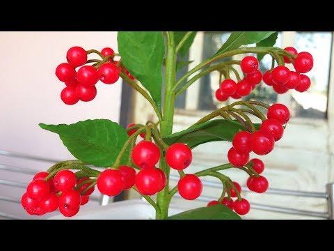 ABC TV | How To Make Ardisia Crenata Plant Paper - Craft Tutorial