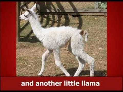 THE NEW LLAMA SONG !!!!!