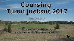 First Runs of Chart Polski, Magyar Agar and Scottish Deerhound • Lieto 2017