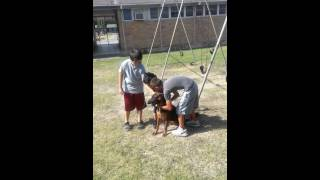 1st Police K-9 Grant Dog Destiny Good with Kids