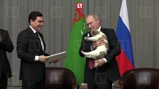 Президент Туркменистана подарил Владимиру Путину щенка-алабая