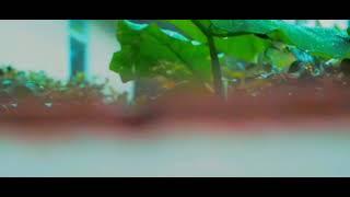 anal mele panithuli song/❤️❤️ download now 👇