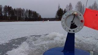 ПЕРВЫЙ ЛЕД 2019-2020 Рыбалка на жерлицы по первому льду. Утренний выход щуки.  Рыбалка на жерлицы.