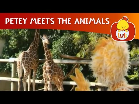 Thumbnail: Petey Meets the Animals - Giraffe and Camel, Luli TV