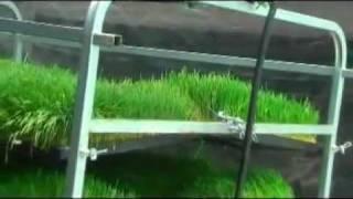Guía para la produccion intensiva de Forraje Verde Hidroponico thumbnail