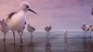 PiPer - So Cute Bird