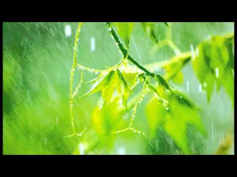10 Minutes of relaxing rain sounds for Meditation. Ideal for Beginners