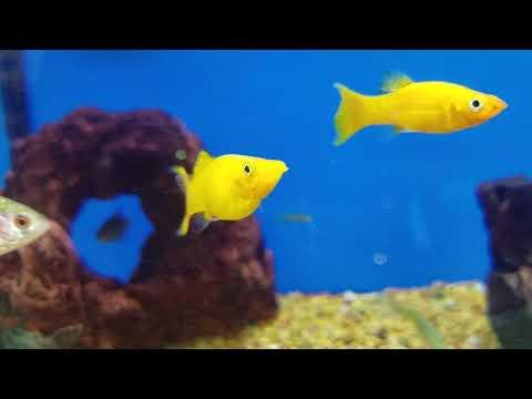 Petco Fish.