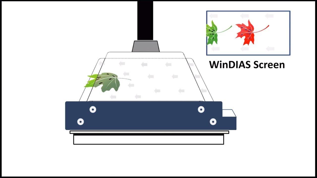 WinDIAS Leaf Area Meter - Leaf Area Measurement System
