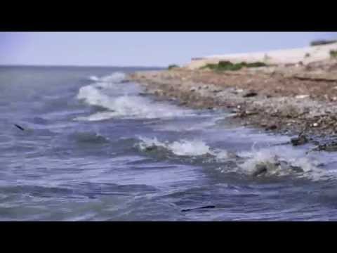 Остров Тюлений