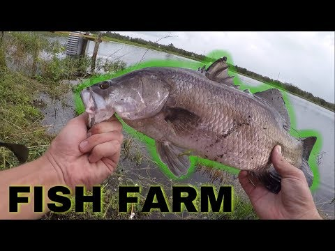 BARRAMUNDI FISH FARM Fishing In SOUTH FLORIDA! *CRAZY*