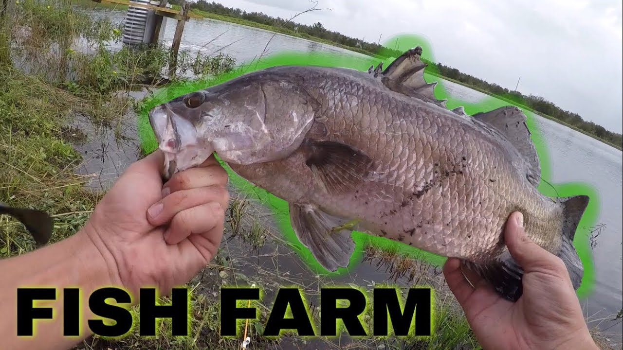 Barramundi Fishing in Florida at Osceola Outback - Fish the Pit