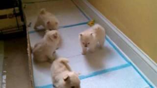 Puppy (Animal)
