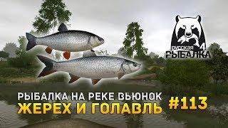 Русская Рыбалка 4 #113 - Рыбалка на реке Вьюнок. Жерех и Голавль