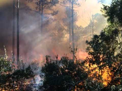Wildfires of Southeast Georgia