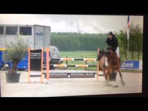 Edsiliavanta (Berlin x nassau) 6 Year old mare