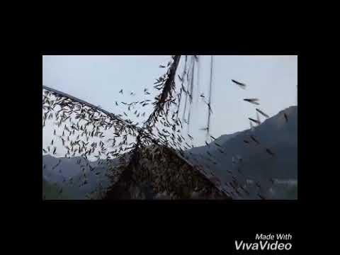 River Fishing By Termite In Hook Nepal!!
