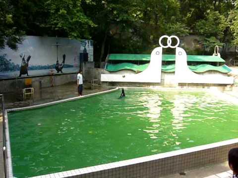Hangzhou Zoo Sea Lion Stunt