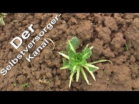 Selbstversorgung aus dem eigenen Garten erster Rundgang 2012