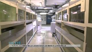 ANIMAUX : Vingt Mille lieues sous les mers à La Rochelle