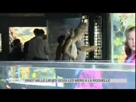 Animaux : l'aquarium de La Rochelle