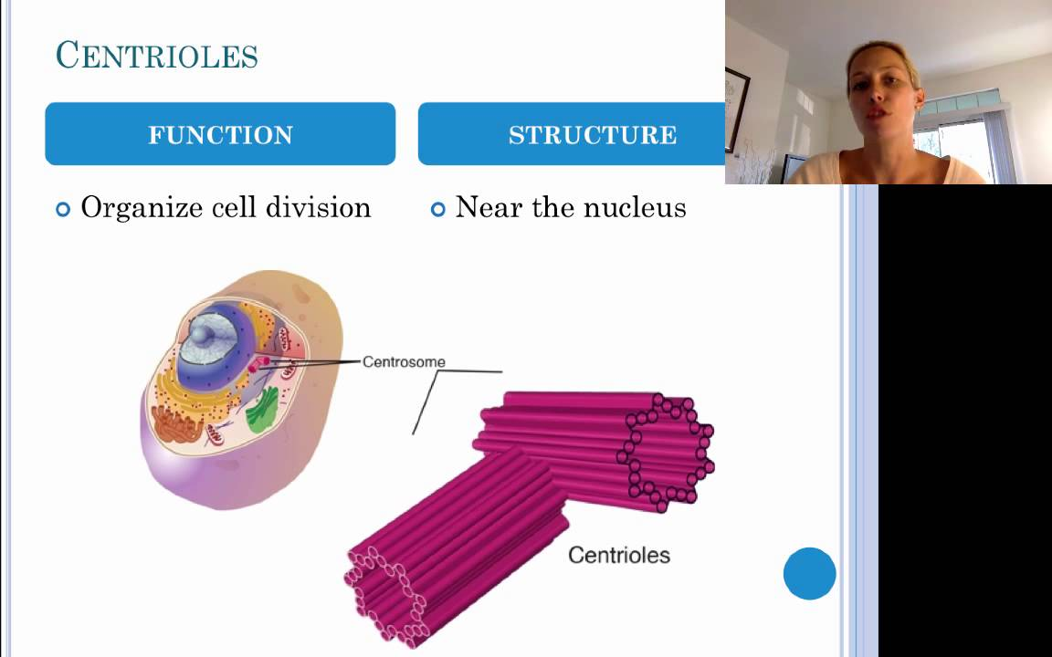 Essay about cell structure and function