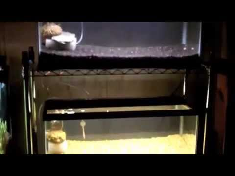 Cycling a planted fish tank aquarium quickly youtube for Cycling a fish tank
