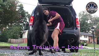 Rosco, 16 month Old mixed Breed | Best Dog Trainers Virginia! | Best ecollar trainers