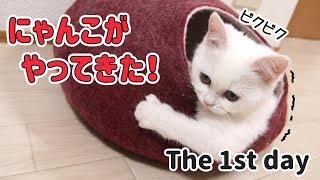 猫との生活のはじまり We have begun to live with a cat.