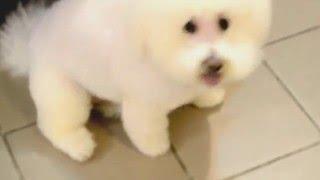 Гигиеническая стрижка собак на дому или в зоосалоне(Хорошая стрижка собаки - это не только приятный внешний вид, но и настроение (все как у людей) http://zoosalon.org.ua., 2016-03-10T12:18:28.000Z)