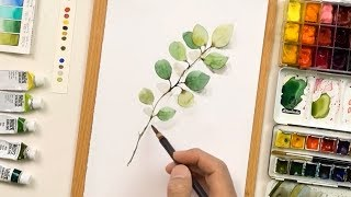 How To Paint Eucalyptus in Watercolor (Easy & Simple)