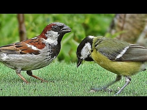 Birds in The Summer Garden : Filmed in Slow Motion