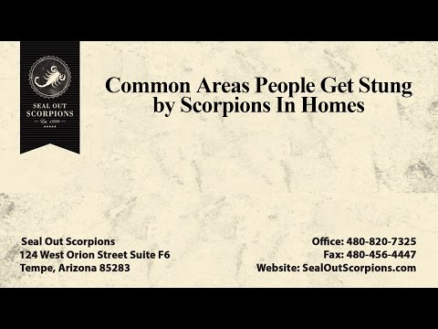 Common Areas of the Home Where People Get Stung by Scorpions | Seal Out Scorpions
